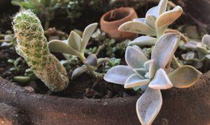 Read more about the article Pandemia e isolamento aumentam procura por cultivo de plantas em casa