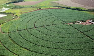 Read more about the article Governo publica novas regras para registro de defensivos agrícolas